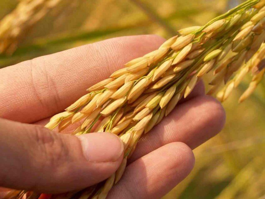 Rachats de crédits et difficultés financières des agriculteurs